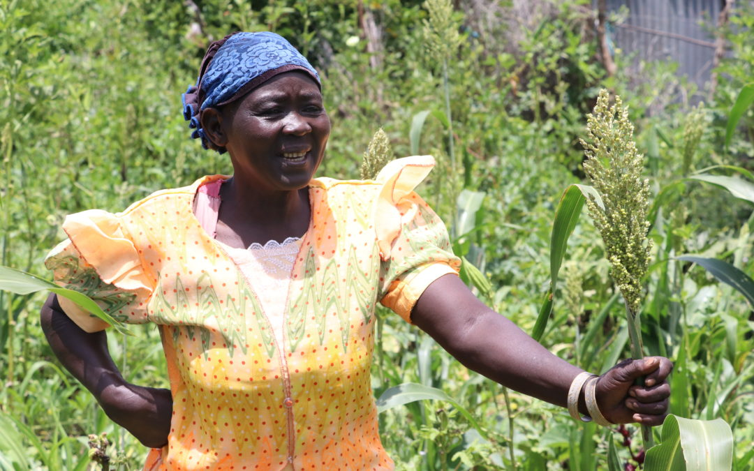 Sowing the seeds of economic growth in Kapoeta East